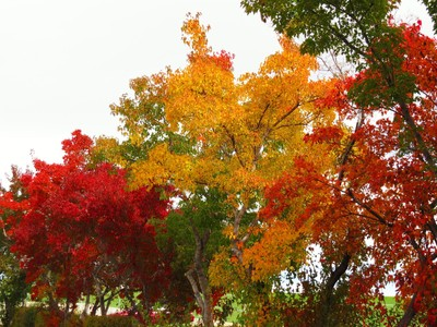 colortrees2