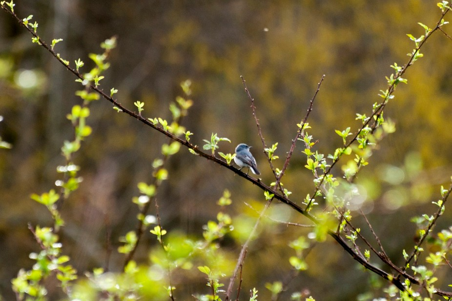 In the Forsythia