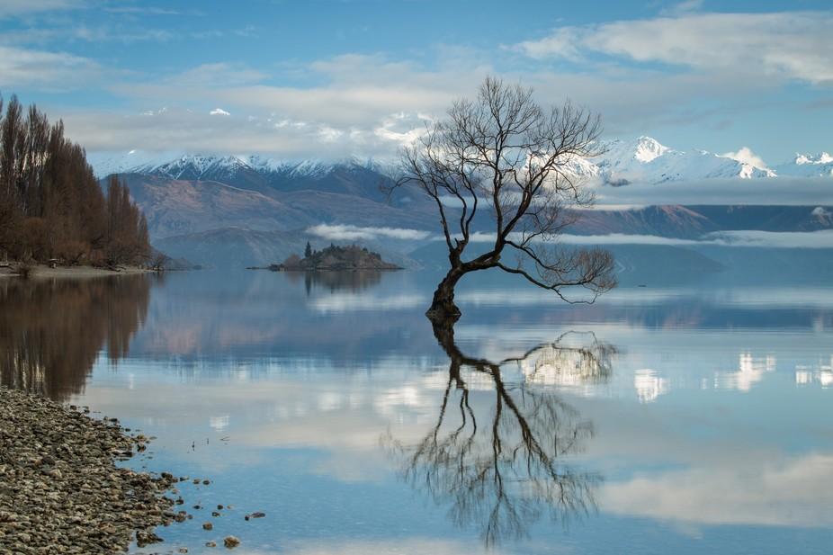 Hannah's Tree / New Zealand