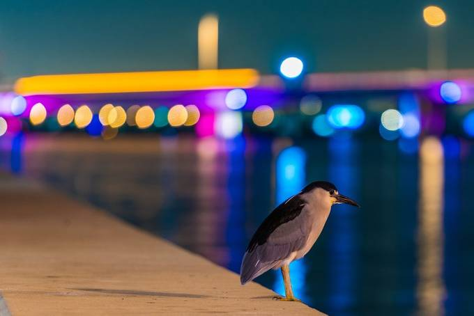Bird and bokeh by PhilMcCabe - Night And Bokeh Photo Contest