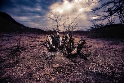 Dead Nature