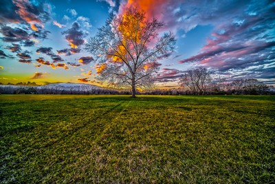 Country Pecan Tree Sunset