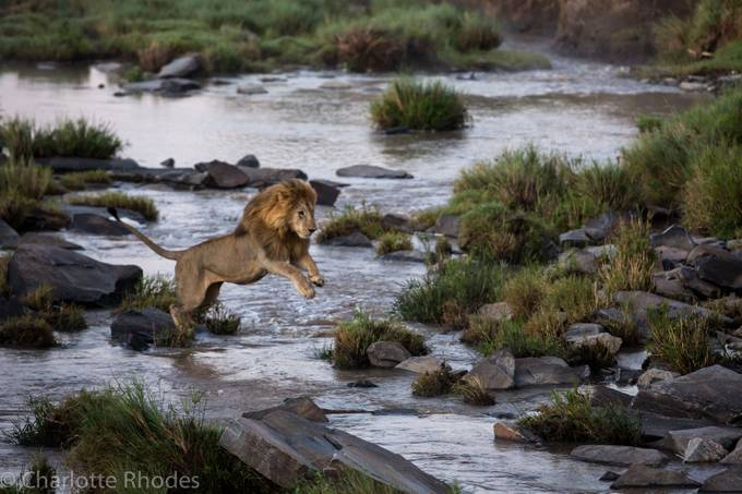 Leap of Faith by charlotterhodes - Streams In Nature Photo Contest