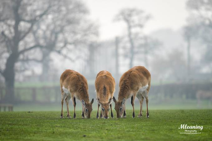 Deer at Yorkshire wildlife Park by martynleaning - Compositions 101 Photo Contest vol4