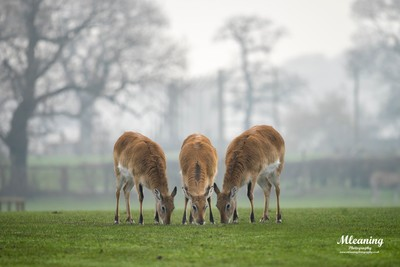 Deer at Yorkshire wildlife Park