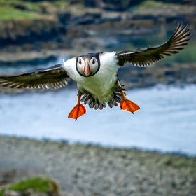 Puffin Approach