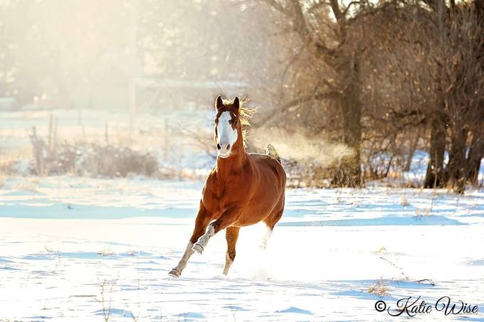 Dashing Through the Snow by shezashootingstar - Farms And Barns Animals Photo Contest