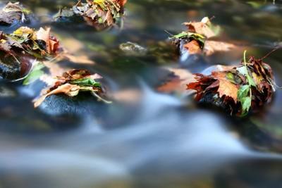 -Leaves longexposure-