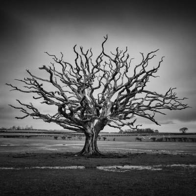 Sian's Tree