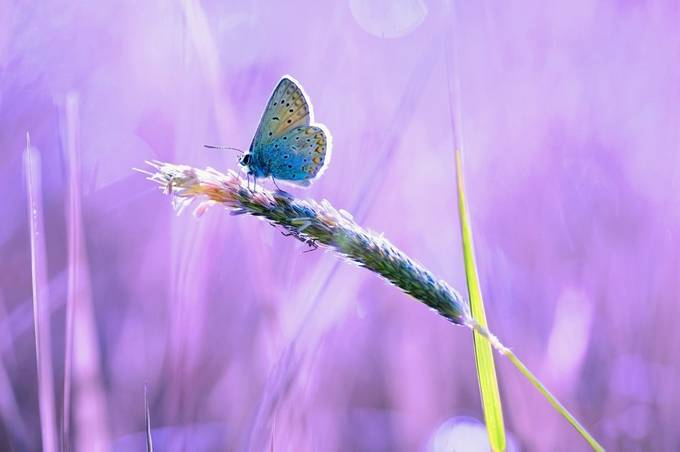 Pastel dream by Barbora_Polivkova - Beautiful Butterflies Photo Contest