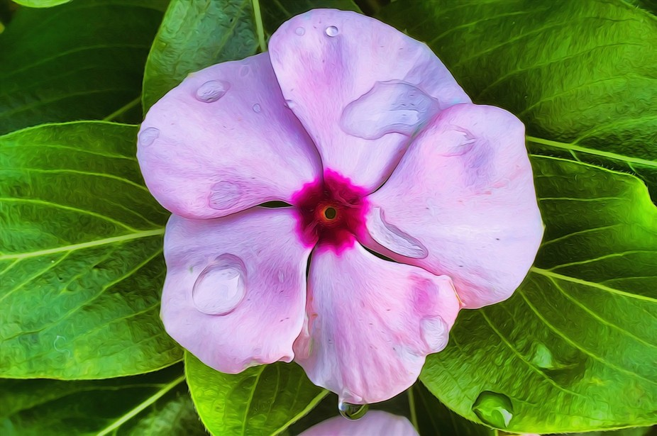 Pink petal with raindrops.