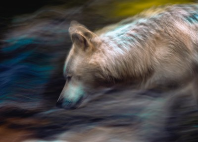 Spirt Of The Wolf