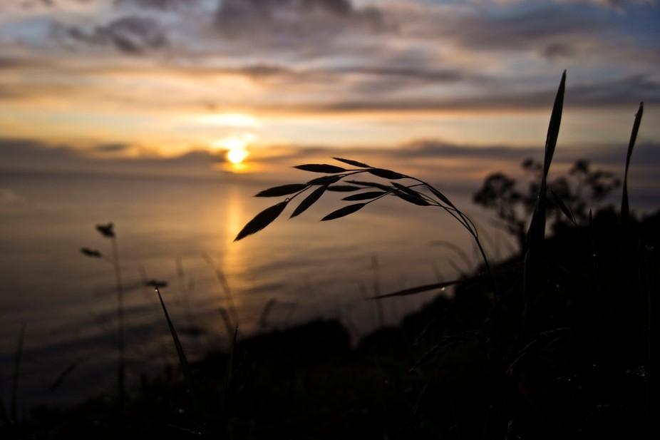 Coramandel Sunrise