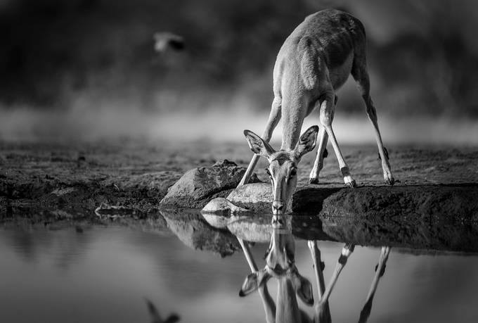 Quench by ingwe911 - ViewBug Photography Awards