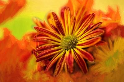 Chrysanthemum Art