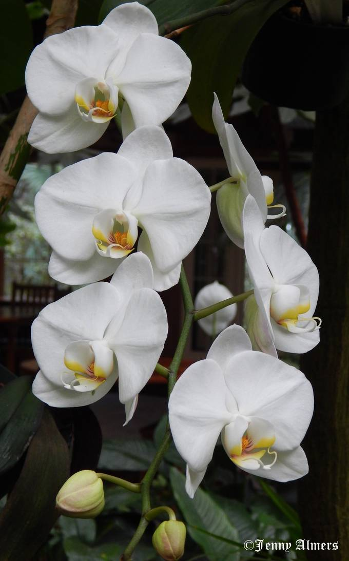 Orchids at Conservatory3