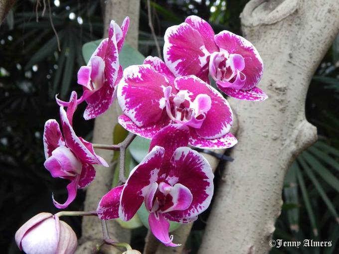 Orchids at Conservatory12