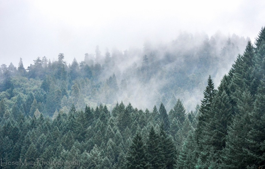 Winter-Green