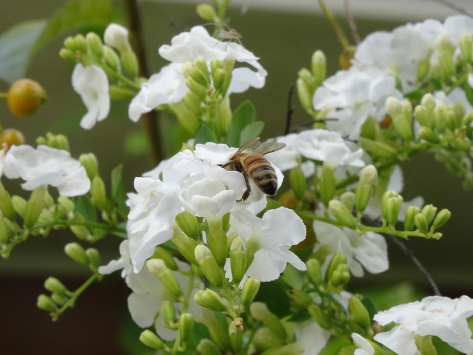 Bee Looking deep