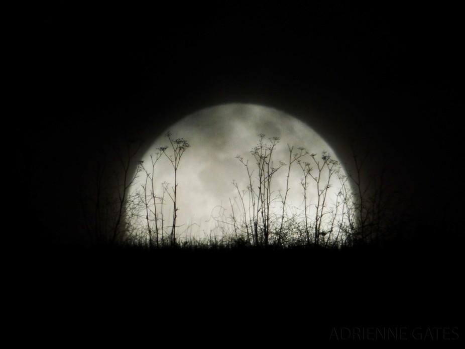 December 25, 2015 Full Moon