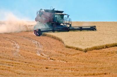 Munching Wheat