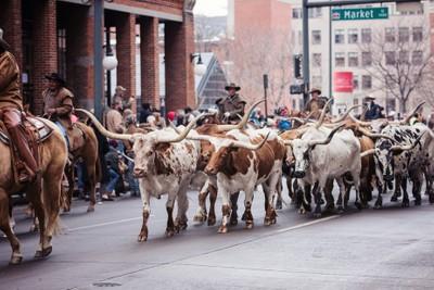 17th Street Steers