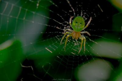 Spider alert