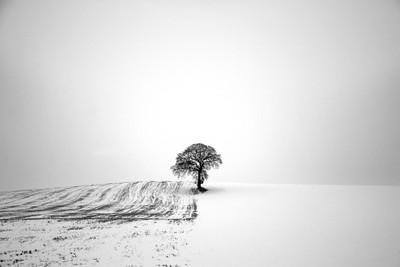 Tree Divide