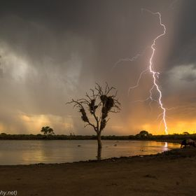 As I saw the hippo leaving the water I wanted something more to raise the shot by a level or two. I knew a lightning strike could give me that le...