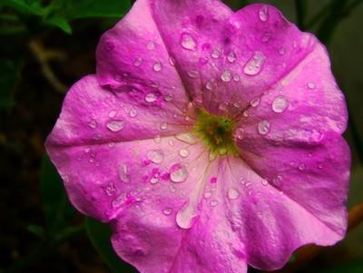rain on flower copy