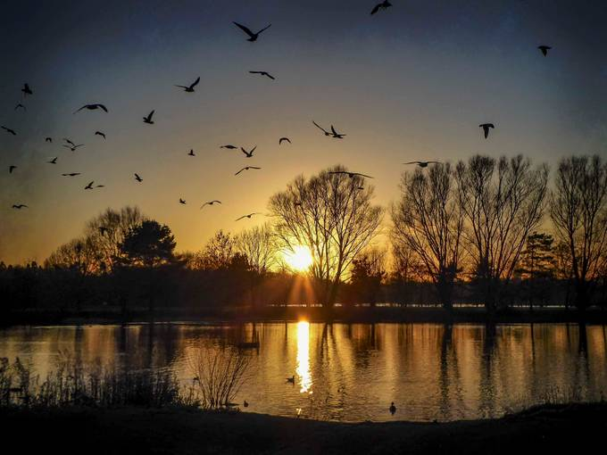 The Final Flight by Willpower128 - Silhouettes Of Trees Photo Contest