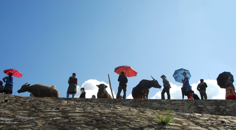 This photo was taken at the buffalo showing area in Bac Ha fair. This is a ethnic traditional fai...