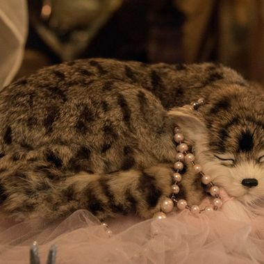 Tabby with Pearls