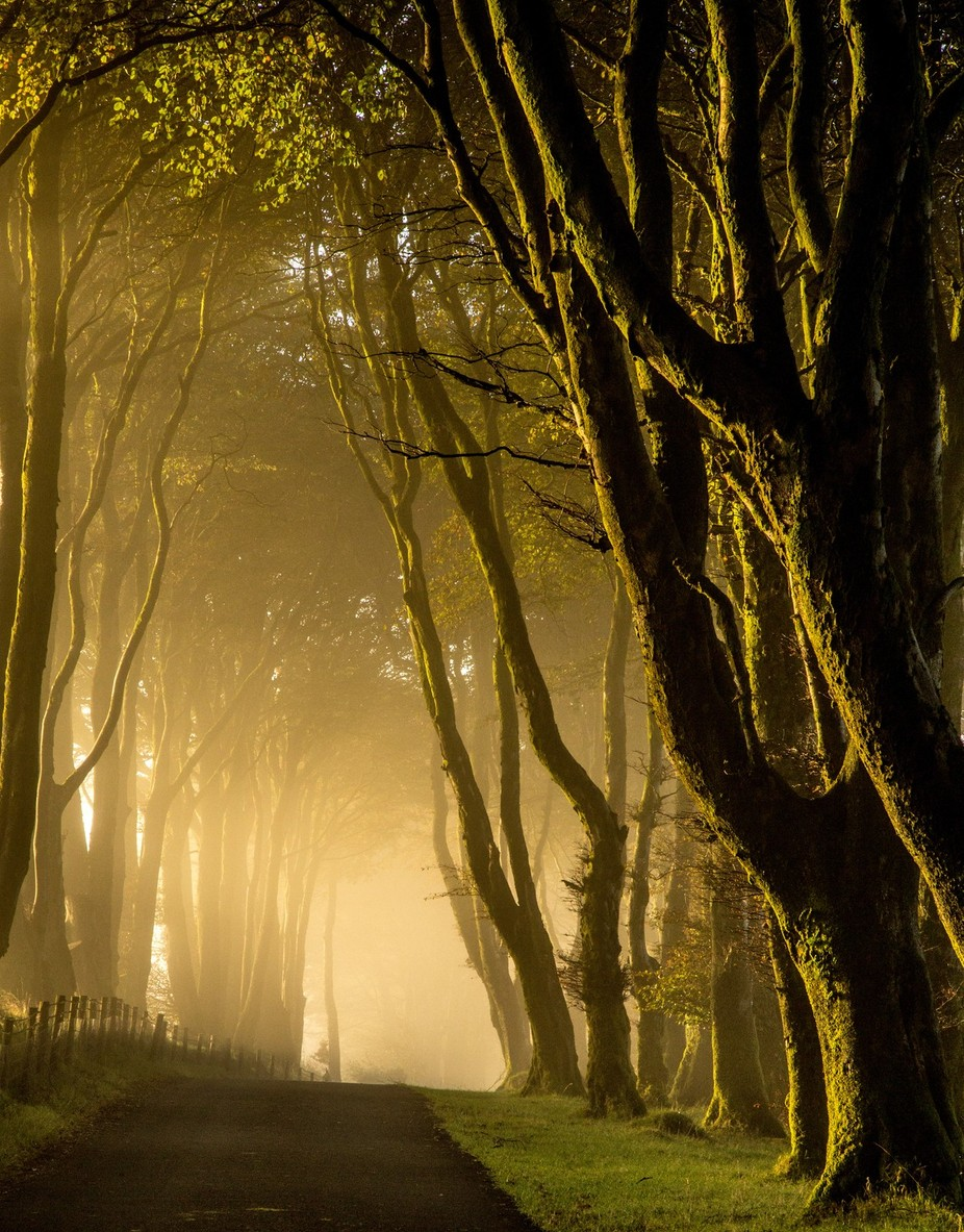 dartmoor forest by cris6773 - Divine Forests Photo Contest