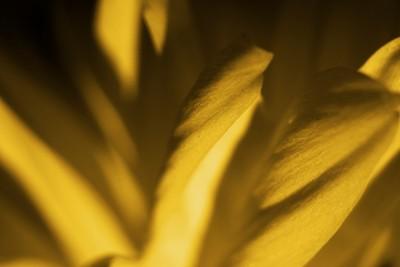 Yellow Macro Flower