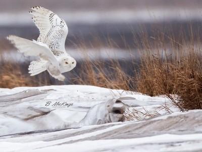 Snowy Takeoff