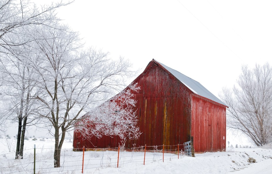 I captured this beautiful barn sitting quietly amid trees kissed with hoarfrost.