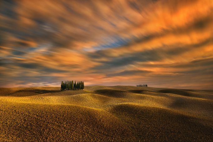 Cypresses... by kbrowko - The Four Elements Photo Contest