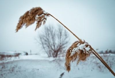 at winter
