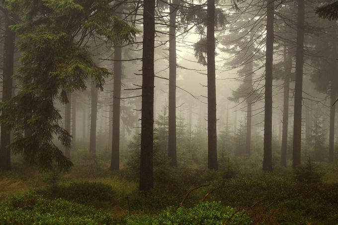 Through the Misty Forest by Stormfari - Divine Forests Photo Contest