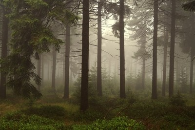 Through the Misty Forest