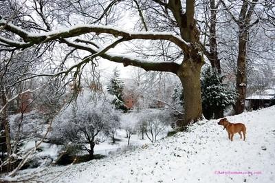 Am I in winter wonderland ?