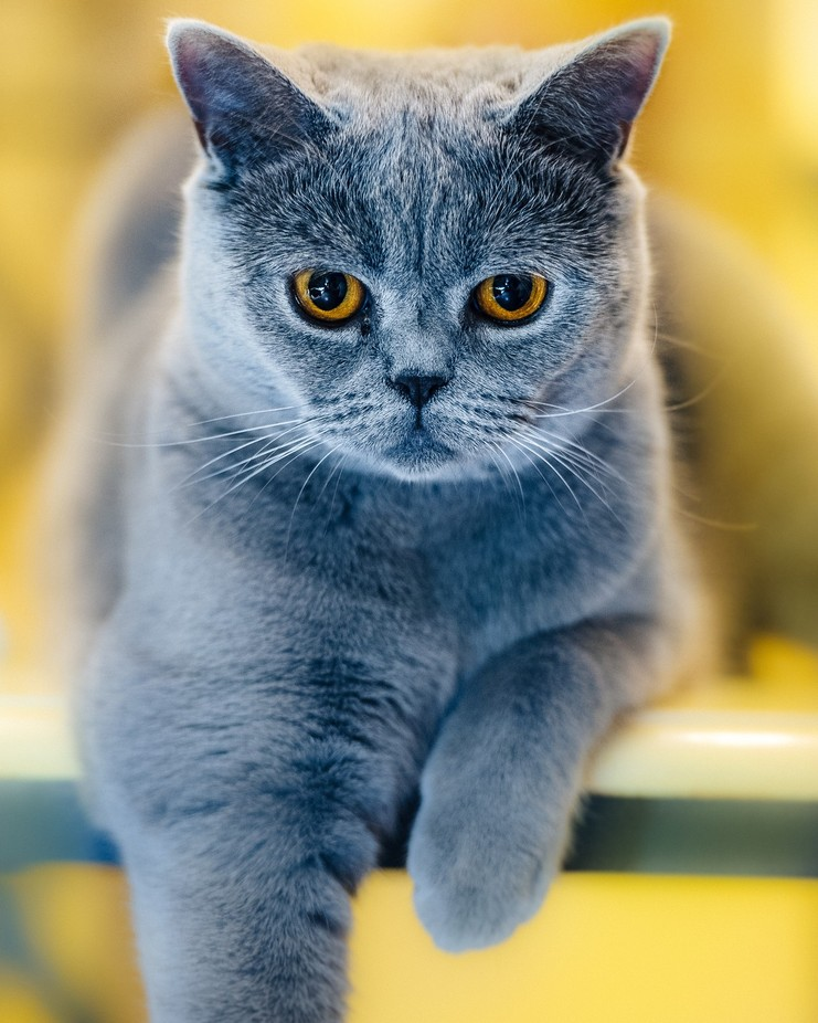Blue by johanlb - Dogs or Cats Photo Contest