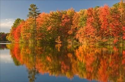 Ashland State Forest Foliage