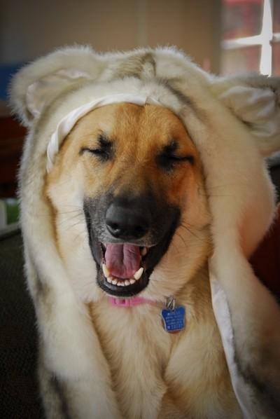 I'm A Pretty Dog