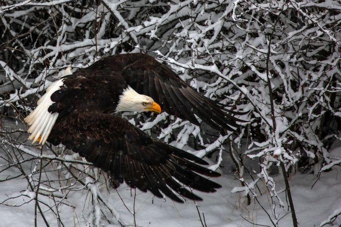 got to go by petefreund - Winter Wildlife Photo Contest