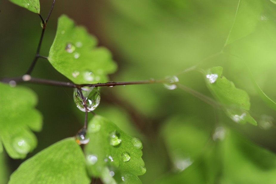 Green raindrops_DSC4017