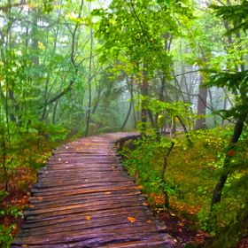 The winding wooden planked pathway leading deep into the Plitvice Lakes.