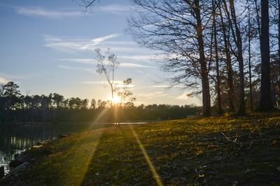 Sun Shinning Through A Tree At Lake Dar'Bonne