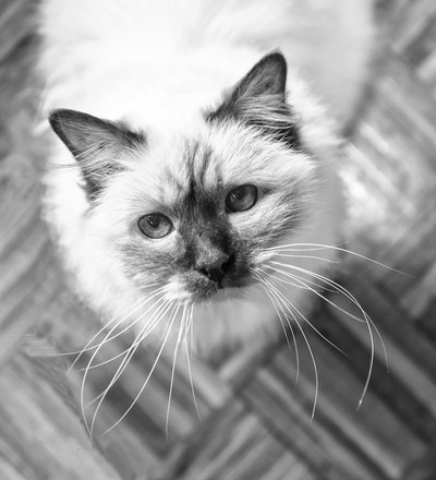 Sharif our Cat
